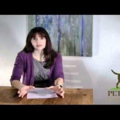 Pets Best Insurance and Dr. Caldwell – Canine Cancer and a Cat Who Chews Metal