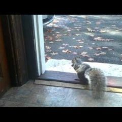 Feeding a funny Squirrel 2012 animal video
