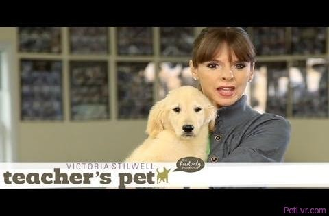 Familiarizing a Puppy to Surfaces & Heights | Teacher's Pet With Victoria Stilwell