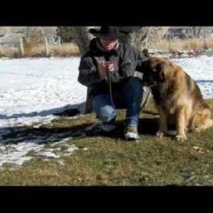 Training Tip – Successful Dog Introductions