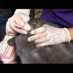 Ep 10 – Cat Health: How To Brush Your Cat's Teeth