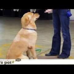 Clicker Training | Teacher's Pet With Victoria Stilwell
