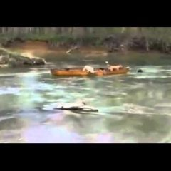 DOG HELPS FRIENDS IN A CANOE