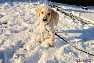 Protect a Dog's Paw Pads During Winter Walks! (Mateusz Stachowski Photo)