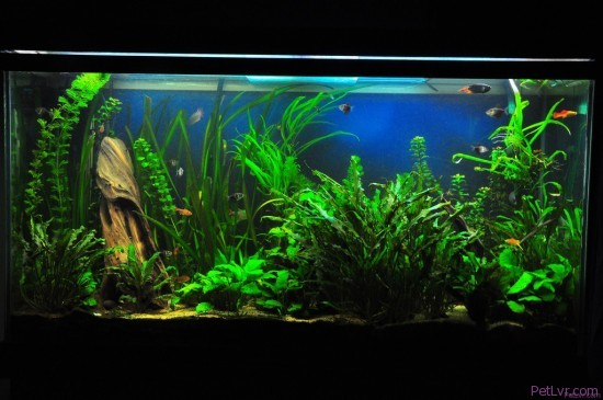 Pet fish for beginners what i 39 m going to propose are for Beginner fish tank