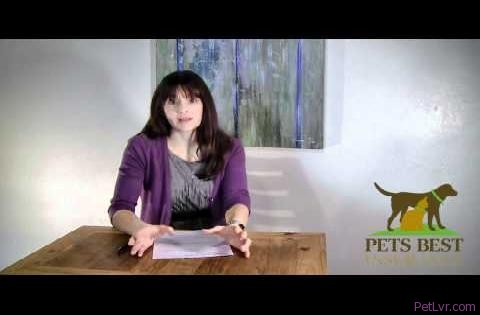 Pets Best Insurance and Dr. Caldwell - Canine Cancer and a Cat Who Chews Metal