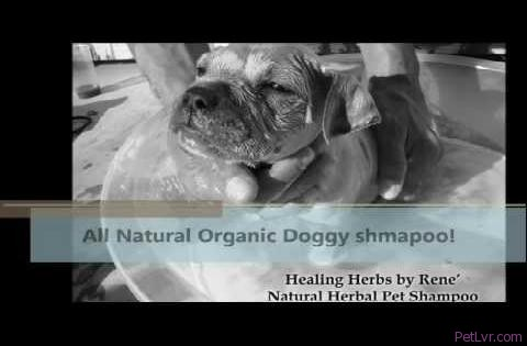 All Natural pet shampoo,Natural Dog Shampoo,Natural Pet Products, By Healing Herbs by Rene