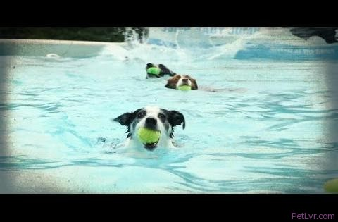 Back to School for Diving Dogs | American Dog With Victoria Stilwell