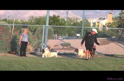 Training my puppy in a dog park
