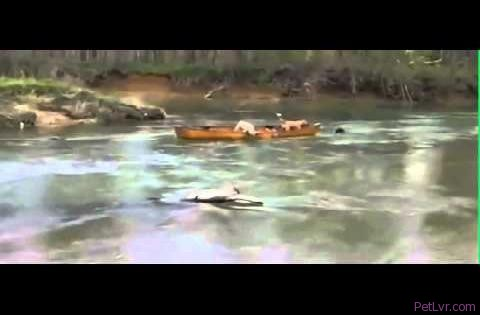 DOG HELPS FRIENDS IN A CANOE / UN CHIEN AIDE SES POTES EN DÉTRESSE