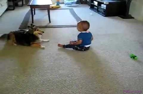 A Cute Dog Plays With Little Baby